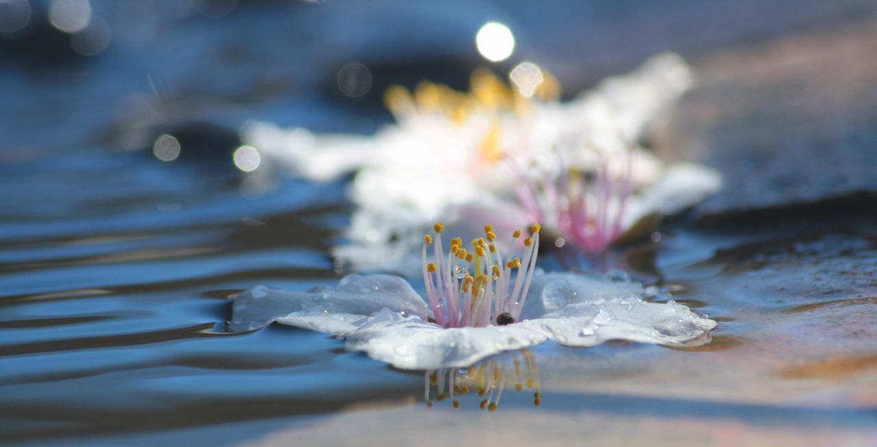 Close-Up Of Flower In Water