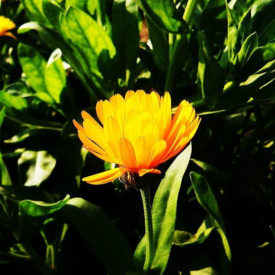 Taken with my LG L90.. Mobilephotography Foreonedits Photography Photooftheday Park Nature Beautiful Alone Morning Wondering Exploring LG  Cam Phone Follow Picoftheday Sunflower Green Naturelovers Instagram Naturesbeauty
