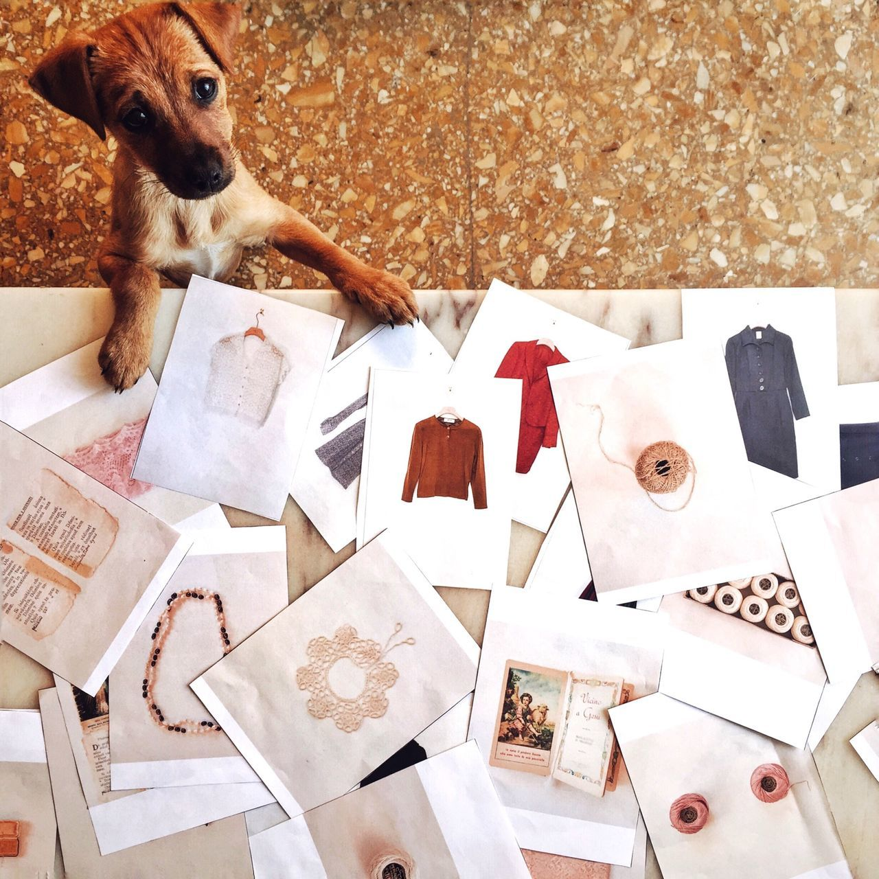 Beautiful stock photos of italy, Animal Themes, Choice, Collection, Dog