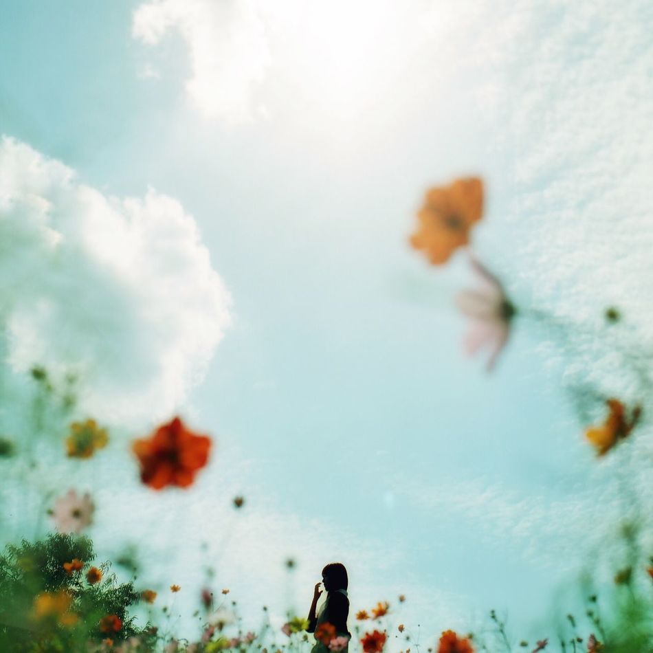 Beautiful stock photos of camera, Beauty In Nature, Blooming, Cloud - Sky, Cloudy