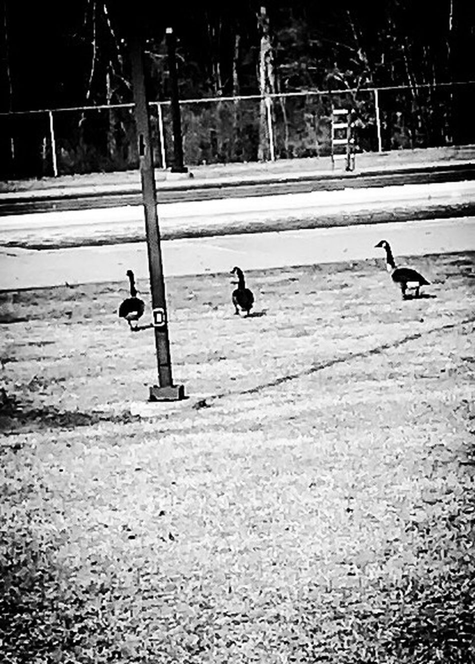 Some visitors at the local pool in winter Outdoors Day One Person Sky Camerafilters IPhone7Plus Blackandwhite Photography Bare Tree Clear Sky
