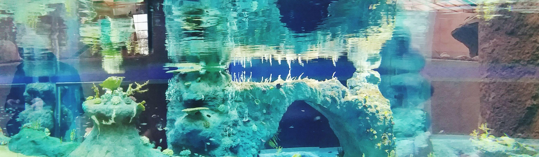 ZOO Wrocław. Afrykarium Zoo Afrykarium Wroclaw Wrocław Poland Polska Water Akwarium Reef Rafa