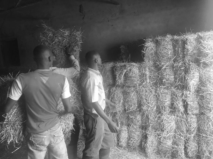 Investing In Quality Of Life Manual Worker Hay Farm Farmer Working Togetherness Agriculture