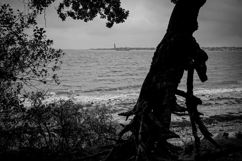 Silhouette Tree Silhouette Sea Sea And Sky Seascape Seaside Tree Trees Blackandwhite Black And White Black & White Nature Water Outdoors