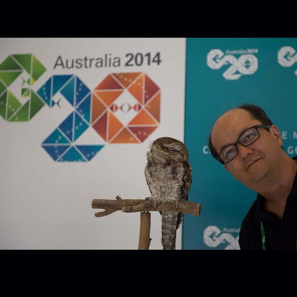 @jkdimagery and a Papuan frogmouth Owl Bird G20 Jkdimagery Cairns