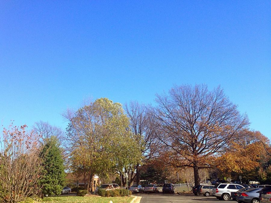 Before Winter.. Trees Clear Sky Beautiful Day