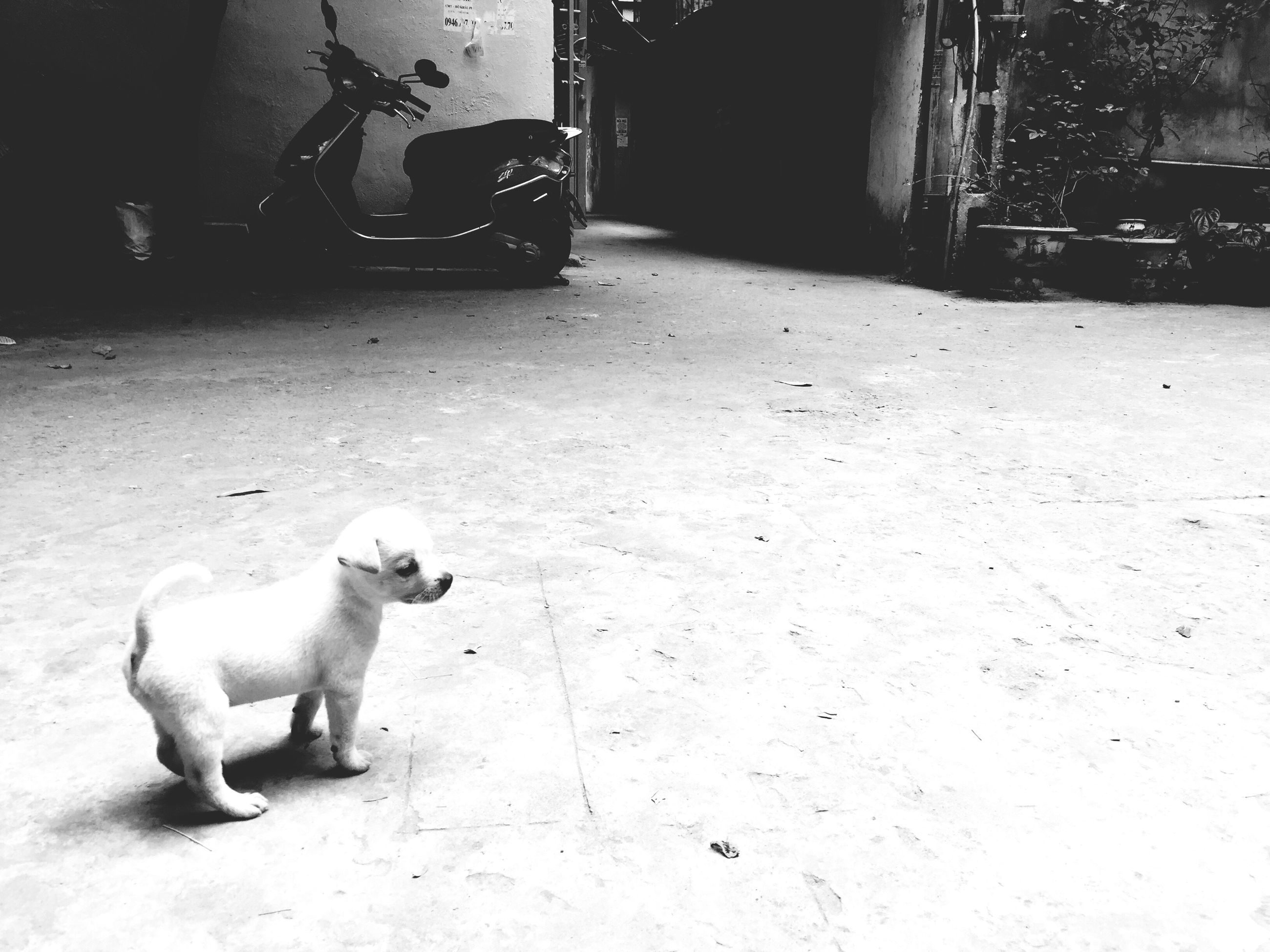 animal themes, dog, one animal, pets, domestic animals, mammal, outdoors, standing, day, low section, no people