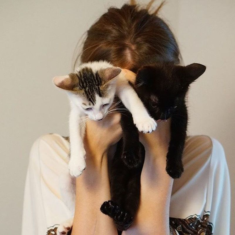 Photo taken by @ayu_3314 <3 Kittensofinstagram Cats Kitten Kitty Portrait Cute Pet