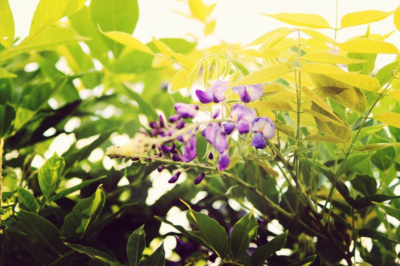 Close-up of purple flowers and leaves