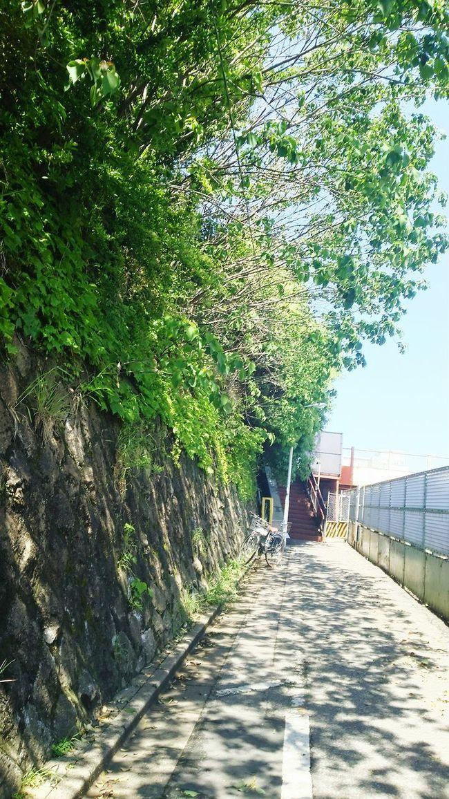Green Wood Walking Around Japan