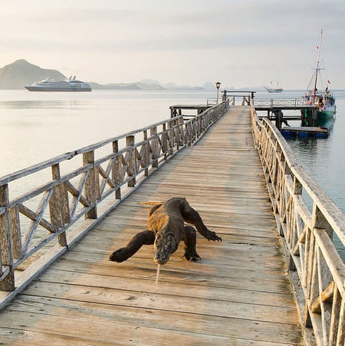 Pulau komodo One Animal Bridge - Man Made Structure Animal Themes Animal Sea Animal Wildlife Outdoors Pier Nature Landscape No People Harbor Dog Beach Pets Day Sky Millennial Pink Flying High EyeEmNewHere