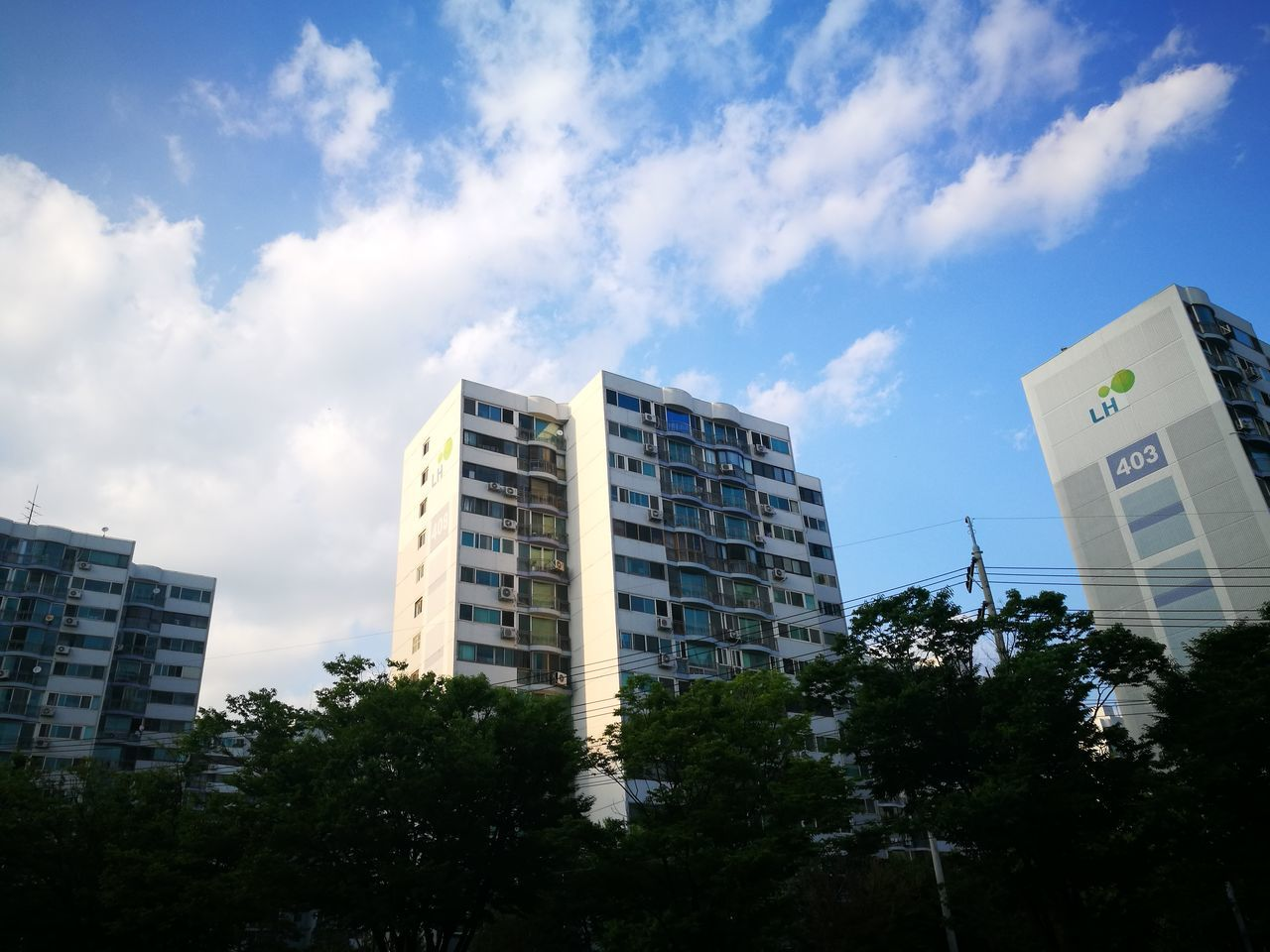tree, low angle view, architecture, sky, growth, day, building exterior, no people, outdoors, modern, city