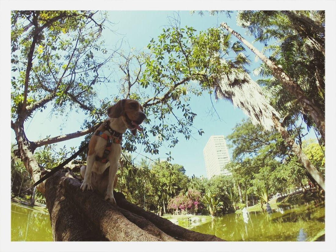 Beagle Beagle<3. Cute Dog Beagle Beaglelife First Eyeem Photo