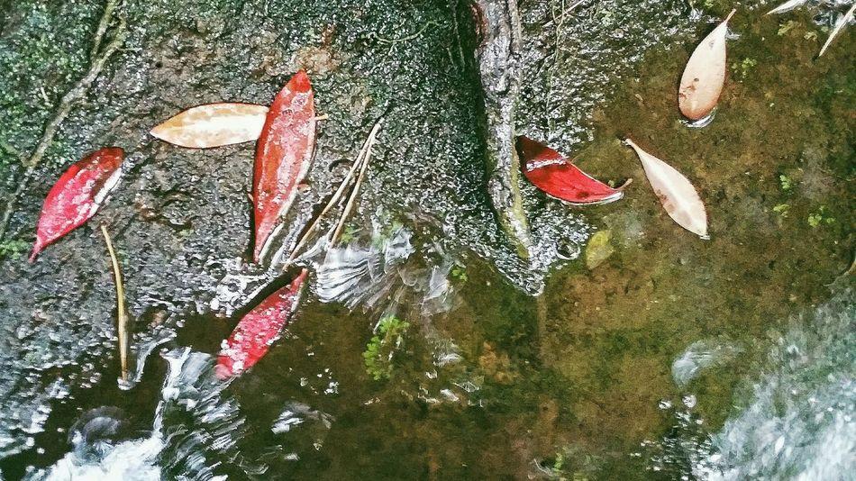 Leaves Autumn Rain Wet Fall 秋 Autumn 2015 Tokyo Autumn 2015 Changing Seasons Landscape Garden Tonogayato Teien Nature Naturelover Naturecollection Naturephotography Urbannature Tokyonature Tokyo Japan Travel Photography