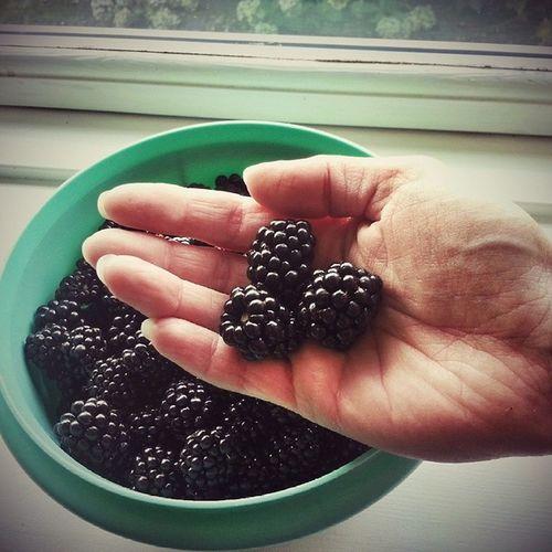 Så blev der lige plukket et kg brombær i haven. Men det går altså også rimeligt stærkt når bærrene er så mutant store som disse. Havesjov Easyliving