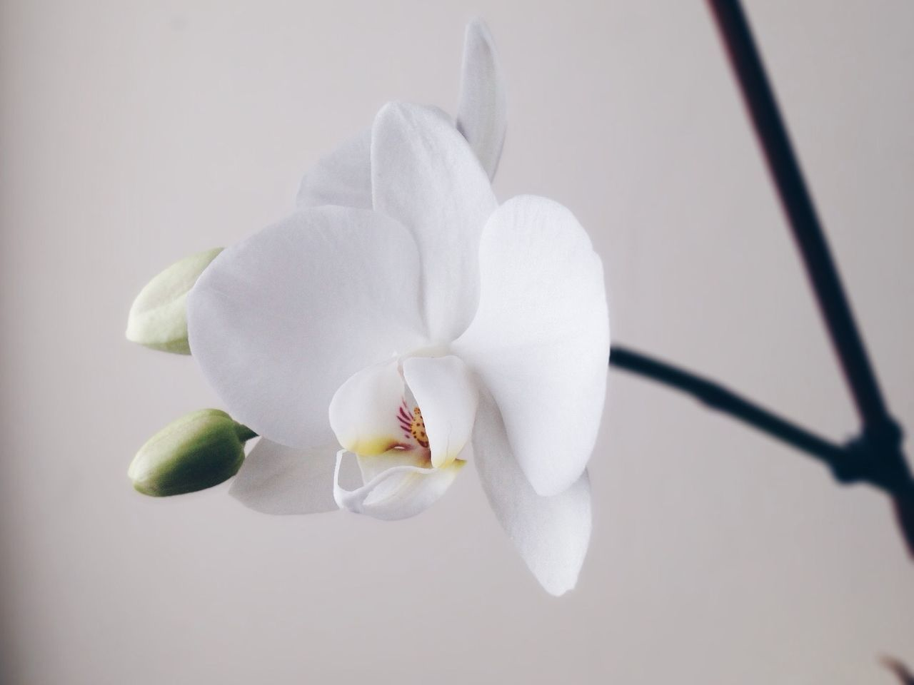 Beautiful stock photos of orchid, Barcelona, Beauty In Nature, Blooming, Close-Up