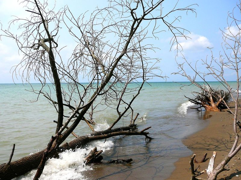 Shoreline Debris, Pelee Island ~ Bare Tree Beauty In Nature Branch Canada Day Dead Wood Driftwood Horizon Over Water Lake Eerie Nature No People Outdoors Pelee Island Scenics Sea Sky Tranquility Tree Trees Uprooted Water Wine Country