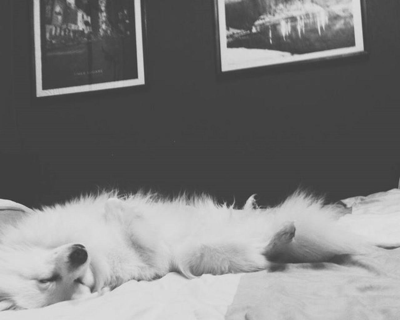 Развалились и спимс 👌🐕🐶 Ночь еся Осень2015 Sleep красота пораспать