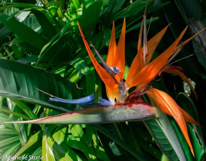 Bird Of Paradise - Plant Beauty In Nature Flower Exotic