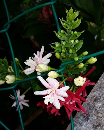 Flower Nature Beauty In Nature Freshness The Beauty Of God's Creation ^.^ hidup ni tak lama.... oleh itu, bertaubat lah selagi masih sempat..