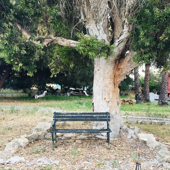 Torrance,CA Walking Around Park Bench Trees