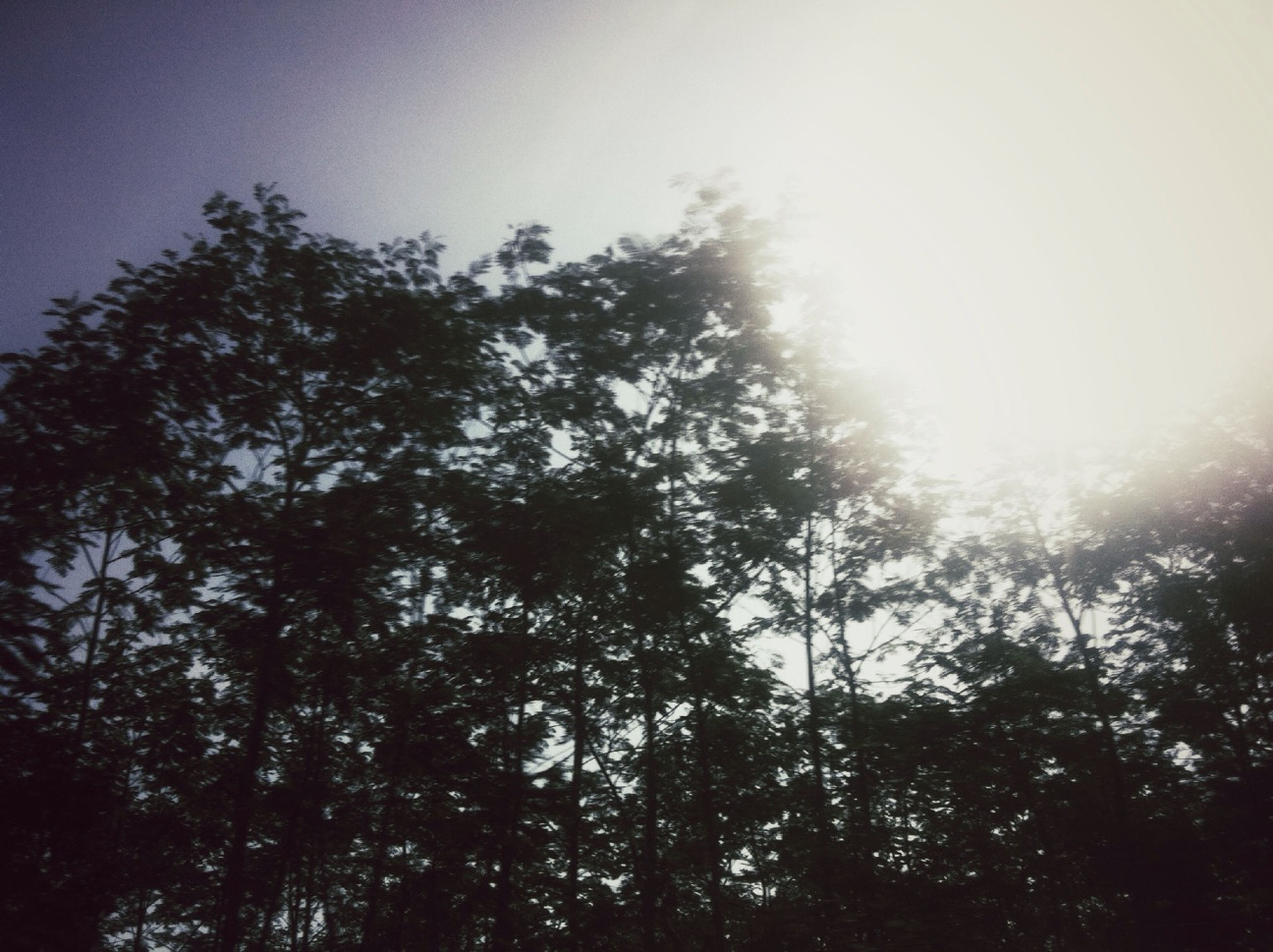 tree, low angle view, sun, tranquility, growth, beauty in nature, nature, sunbeam, sunlight, sky, tranquil scene, silhouette, scenics, clear sky, lens flare, forest, branch, outdoors, day, no people