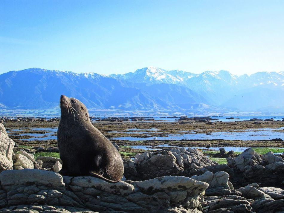 Beautiful stock photos of seal,  Animal Wildlife,  Animals In The Wild,  Aquatic Mammal,  Beauty In Nature