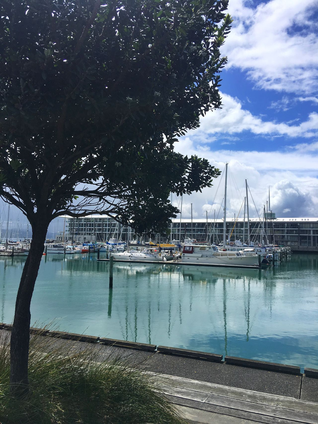 A gorgeous day around the marina Tree Water Nautical Vessel Reflection Moored Marina Boats Boating Boats And Moorings Harbour