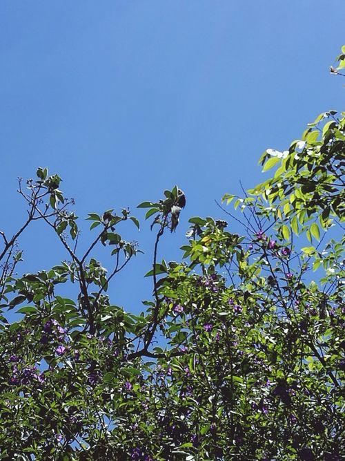 South African Bird Life , Garden Trees