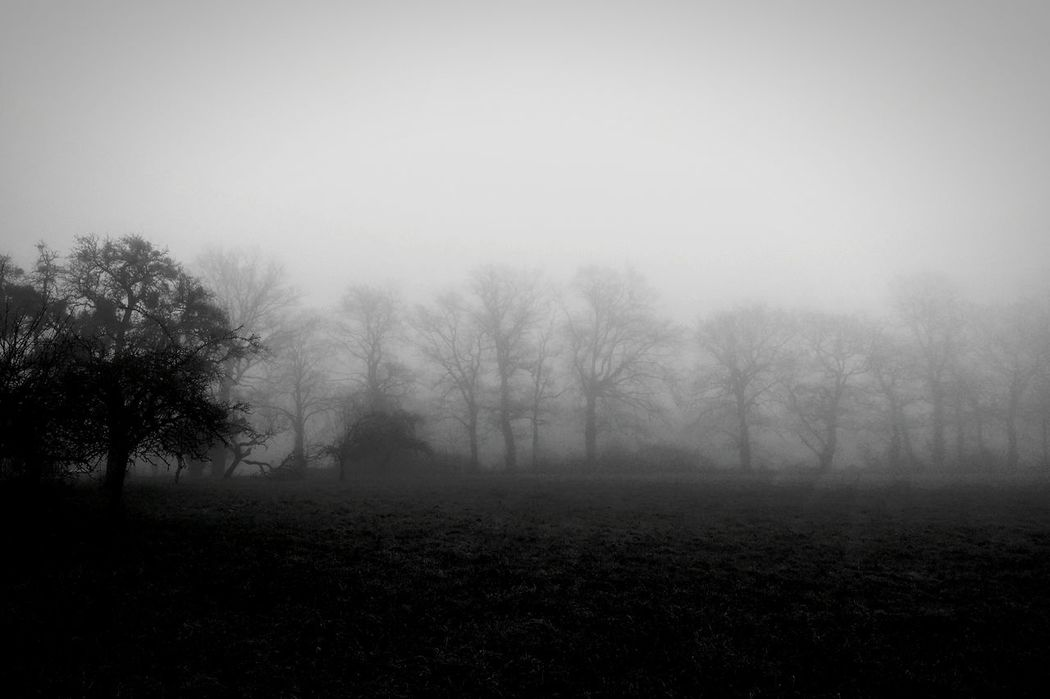 Nature Photography Atmospheric Mood Dark And Light Dark Photography Blackandwhite Blackandwhite Photography Black & White Light And Shadow Dusk Atmosphere Light In The Darkness Darkness Fog In The Trees Beauty In Nature Tranquility