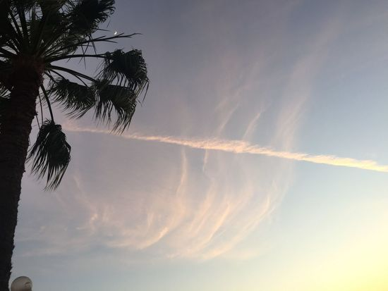 Beauty In Nature Day Low Angle View Nature No People Outdoors Palm Tree Sky Sunset Tree Vapor Trail