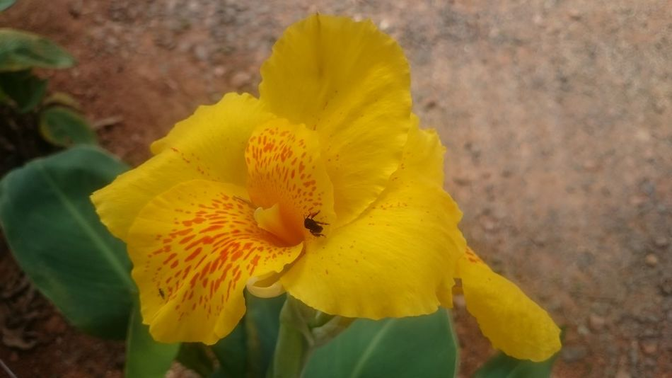 Semfiltro XperiaZ1 Campinas, São Paulo, Brasil Natureza 🐦🌳 Parquedasaguas Flowers