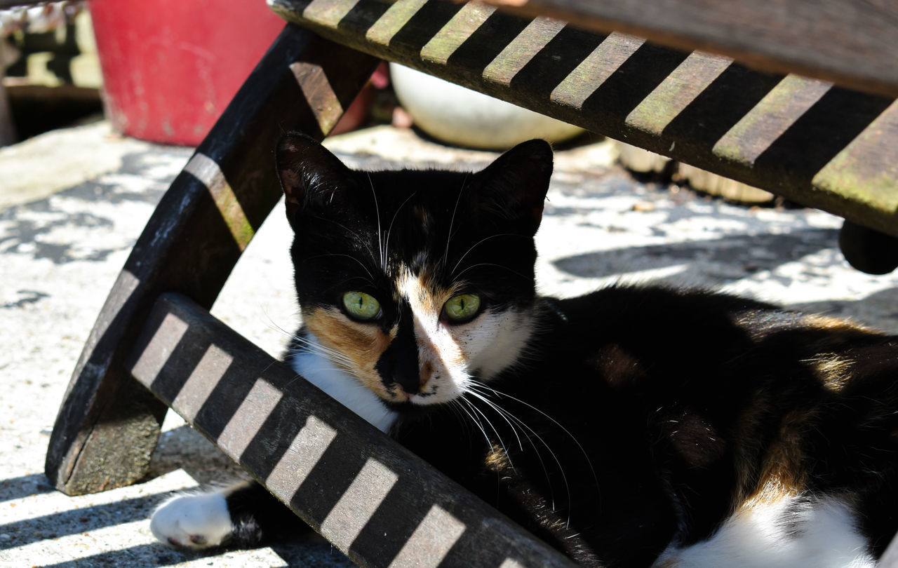 Animal Themes Cat Close-up Day Domestic Animals Domestic Cat Feline Green Eyes :) Green Eyes! Looking At Camera Mammal Moggy Neighbors Cat No People One Animal Outdoors Pets Portrait Shadow Shadows & Lights Sitting
