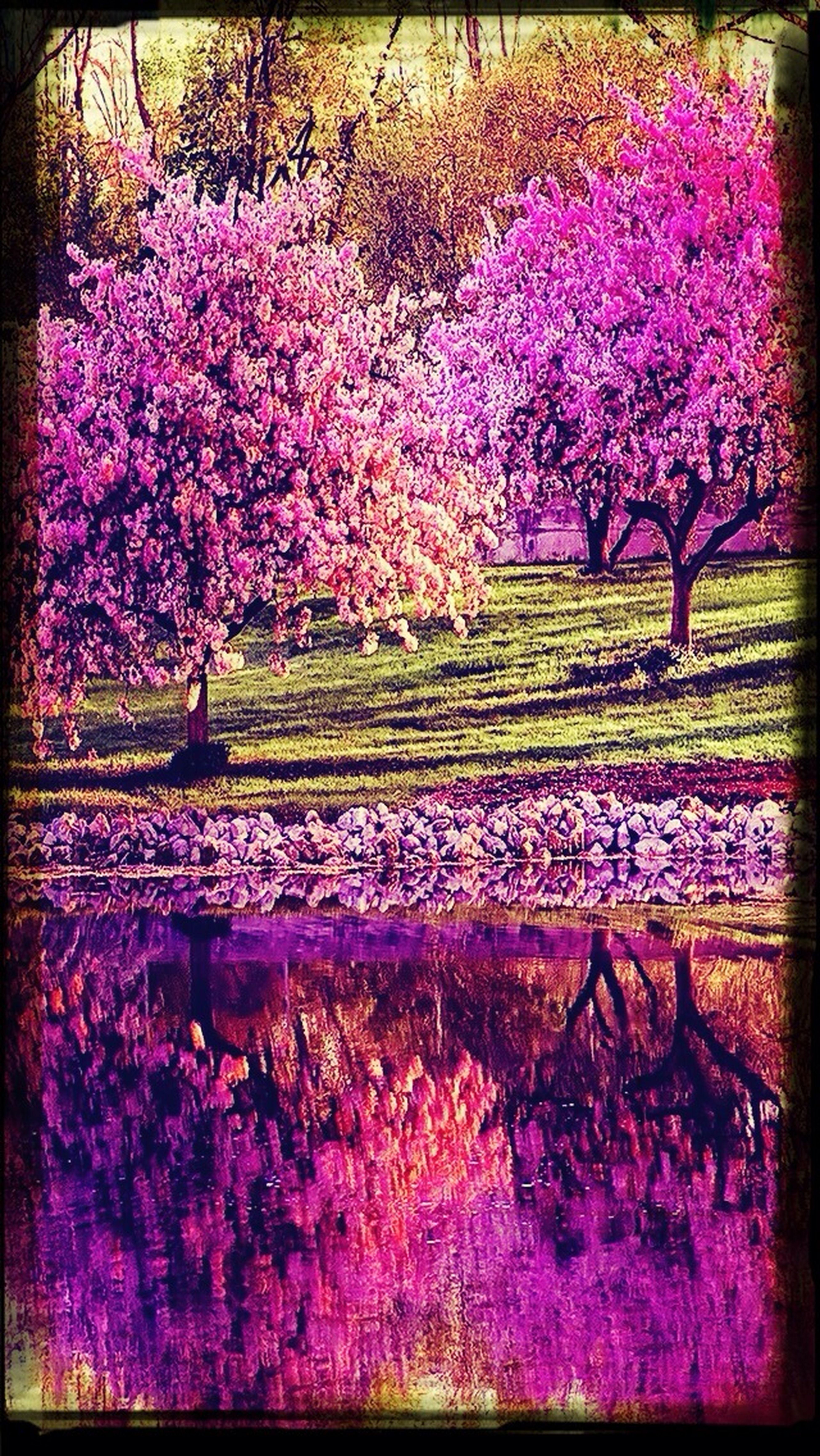 Spring Hurry Up! BeautifulBeautiful Nature ?????