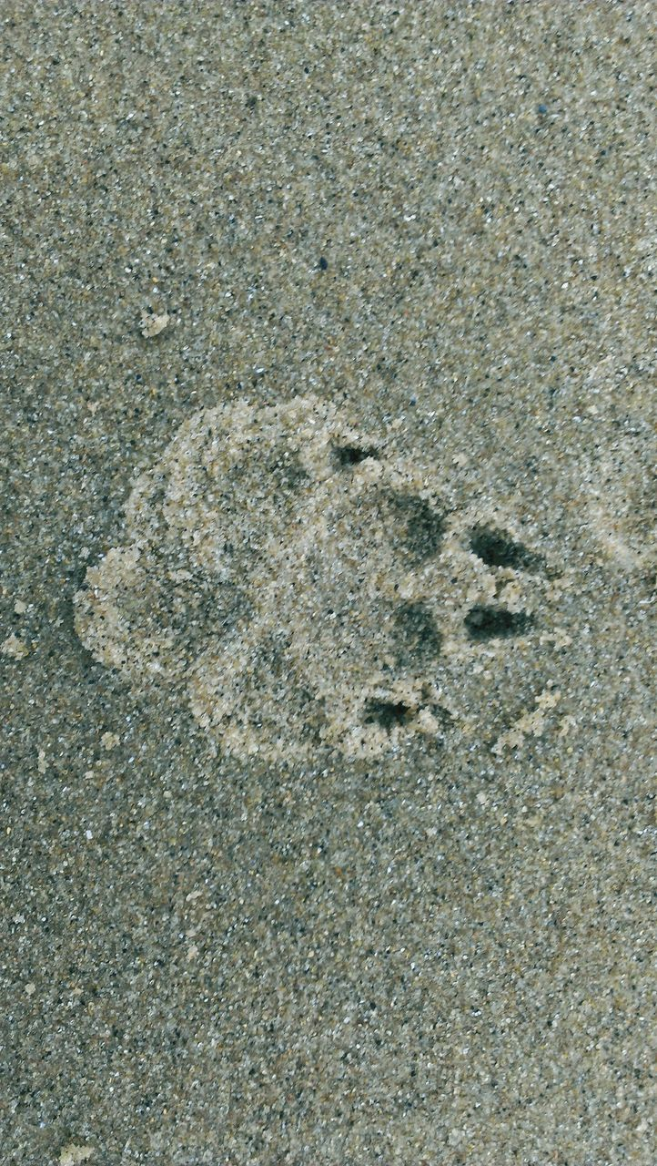 animal track, paw print, footprint, beach, no people, nature, day, high angle view, outdoors, sand, backgrounds, pattern, track - imprint, full frame, close-up