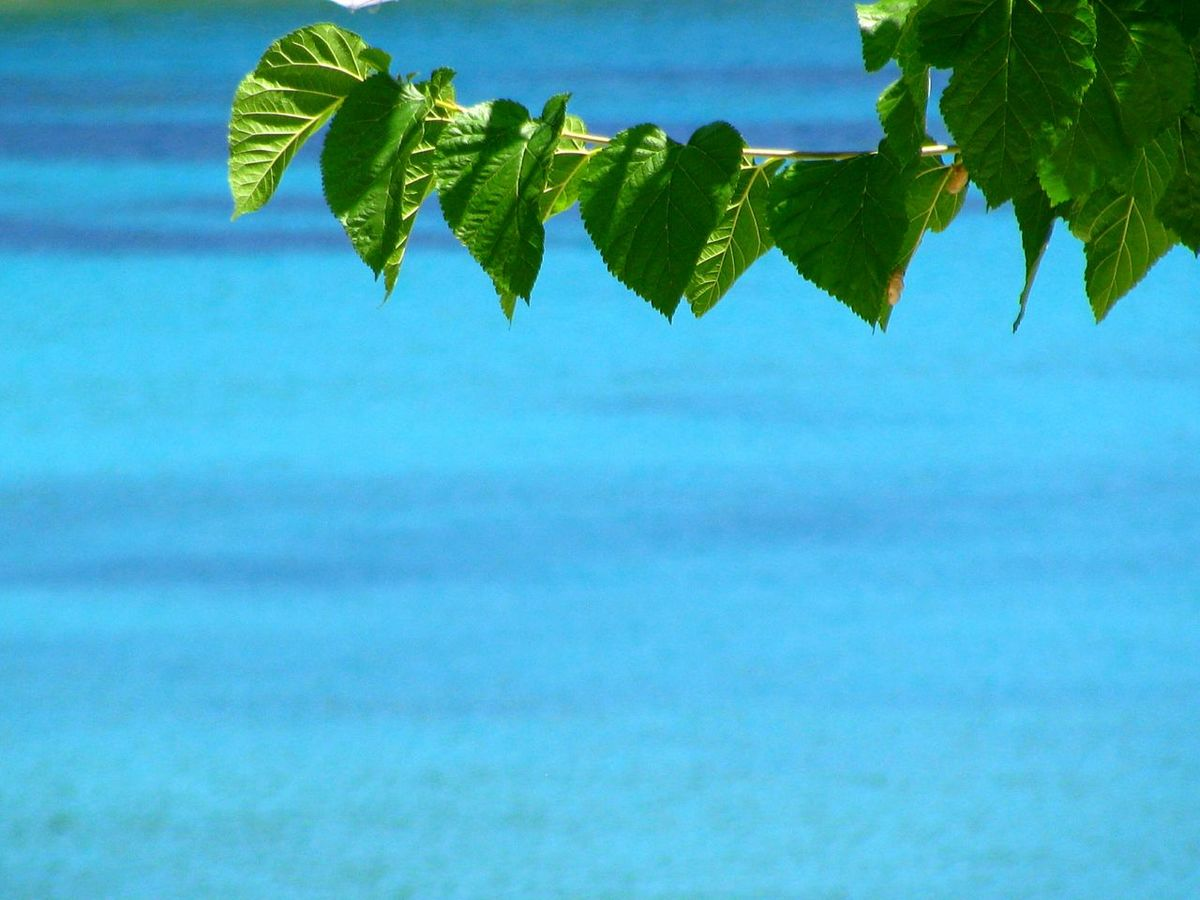 Tree Branch  against the Sea Tree Branches Leaves Leaves🌿 Green Leaves Growth Beauty In Nature Tranquility Nature Focus On Foreground Tranquil Scene Blossom Minimalism Minimalobsession Minimal Greek Islands Shades Of Blue Blue Wave Blue Sea Green And Blue Light And Shadow Close-up