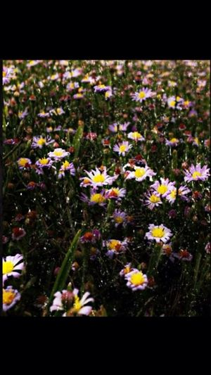 Flowers Photo Editing EyeEm Nature Lover