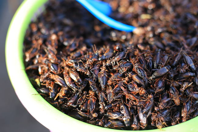 Crickets Bugs Insects  Exotic Food Exotic Thailand Food Local Food Asian  Fried Gusto
