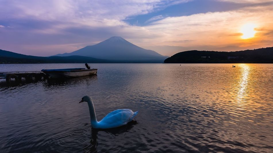 Japan 2016 Mountain Sunset Boat Reflection Japan Photography Japan Photos Mt.Fuji Sunset Mt. Fuji Mt.Fuji 山中湖 Swan In A Lake Swan