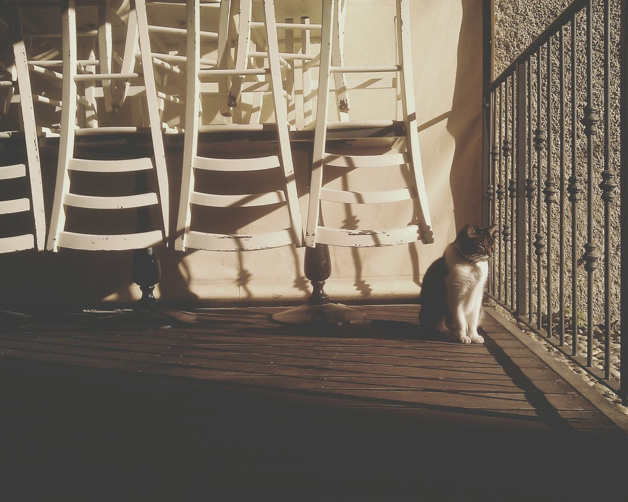 pets, domestic animals, animal themes, one animal, mammal, no people, dog, day, outdoors, full length, low section