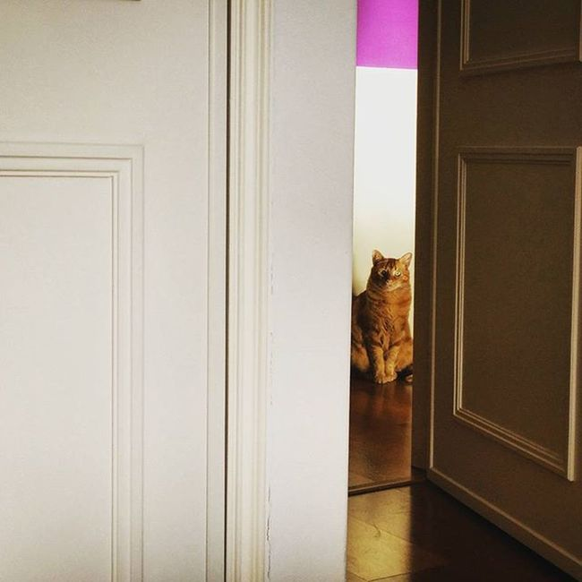 Waitingtoplay Waiting Pacience Jamesthecat James Cats Catsinstagram Light Observe Shadows Gold Purple Lines White Sunnydayswillcome Vscoportugal Igers Lovemypet Laliphotography Yellowcat Love Liveit Faded