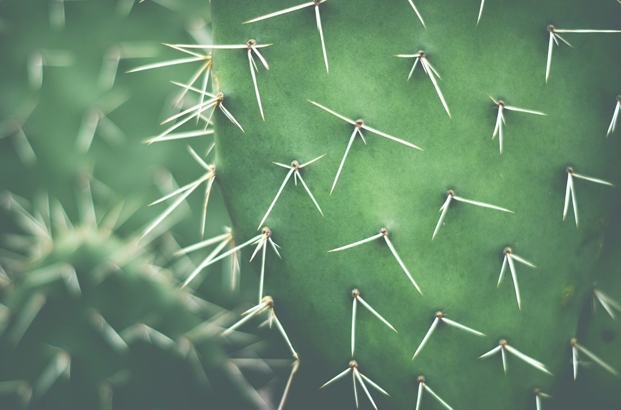 Nopal Nopal Mexico Mexican Mexico City Urban Nature Greenery Green Pattern, Texture, Shape And Form Textures And Surfaces Pattern Pattern Pieces