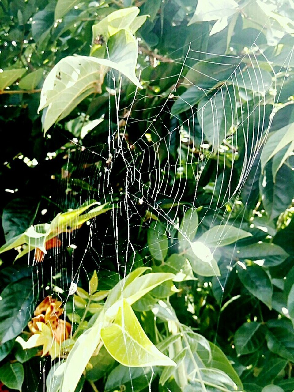 spider web, close-up, web, insect, nature, fragility, spider, focus on foreground, one animal, no people, outdoors, animal themes, day, green color, leaf, animals in the wild, beauty in nature, plant, growth, freshness