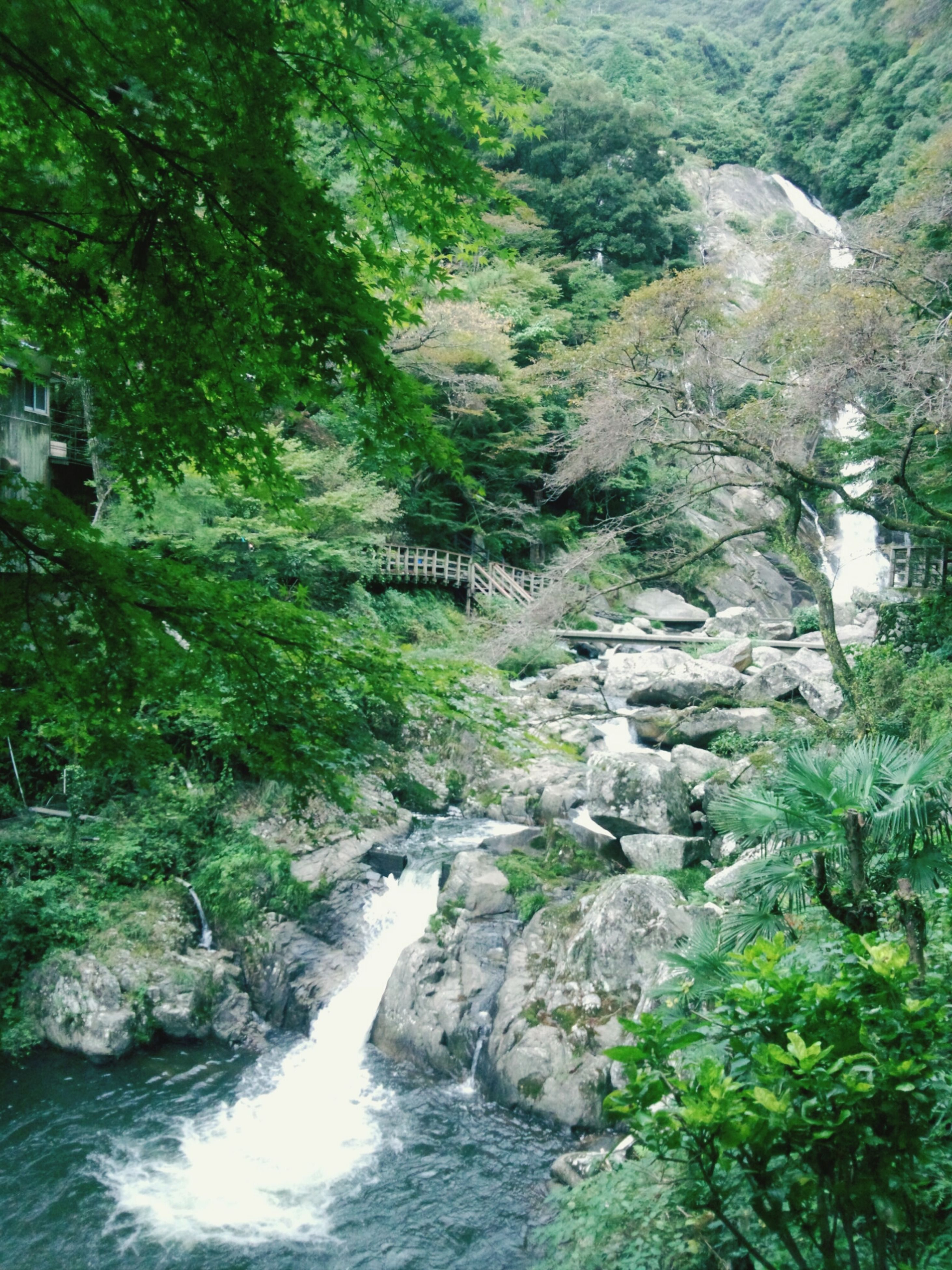 water, tree, waterfall, beauty in nature, rock - object, flowing water, scenics, nature, forest, flowing, stream, rock formation, tranquility, river, tranquil scene, green color, motion, growth, rock, lush foliage