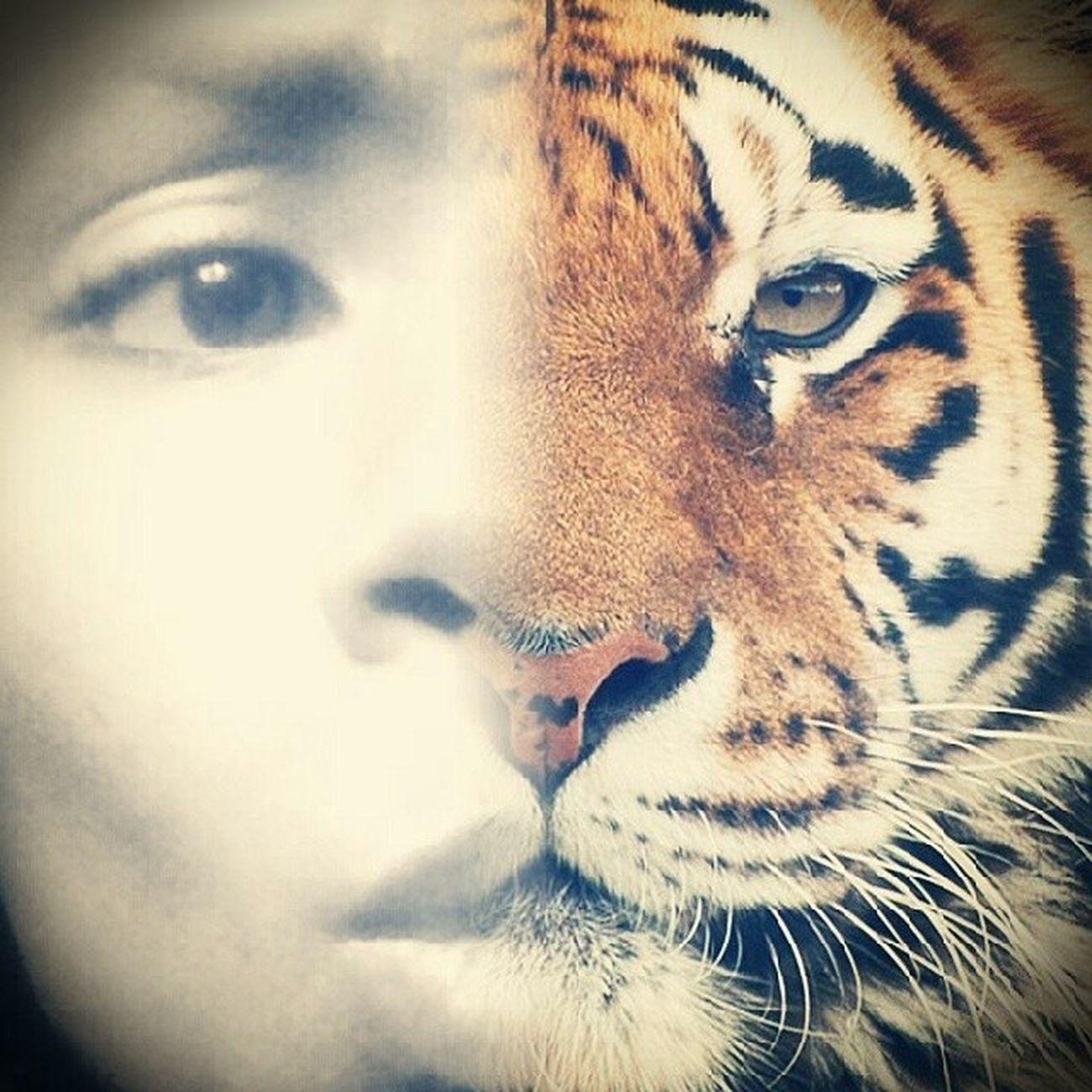 Hoje eu estou um pouco selvagem rs Meu lado Felino se revelando Face Tiger Grr Mesentindoferoz app encaixoudireitinho libereseusinstintos