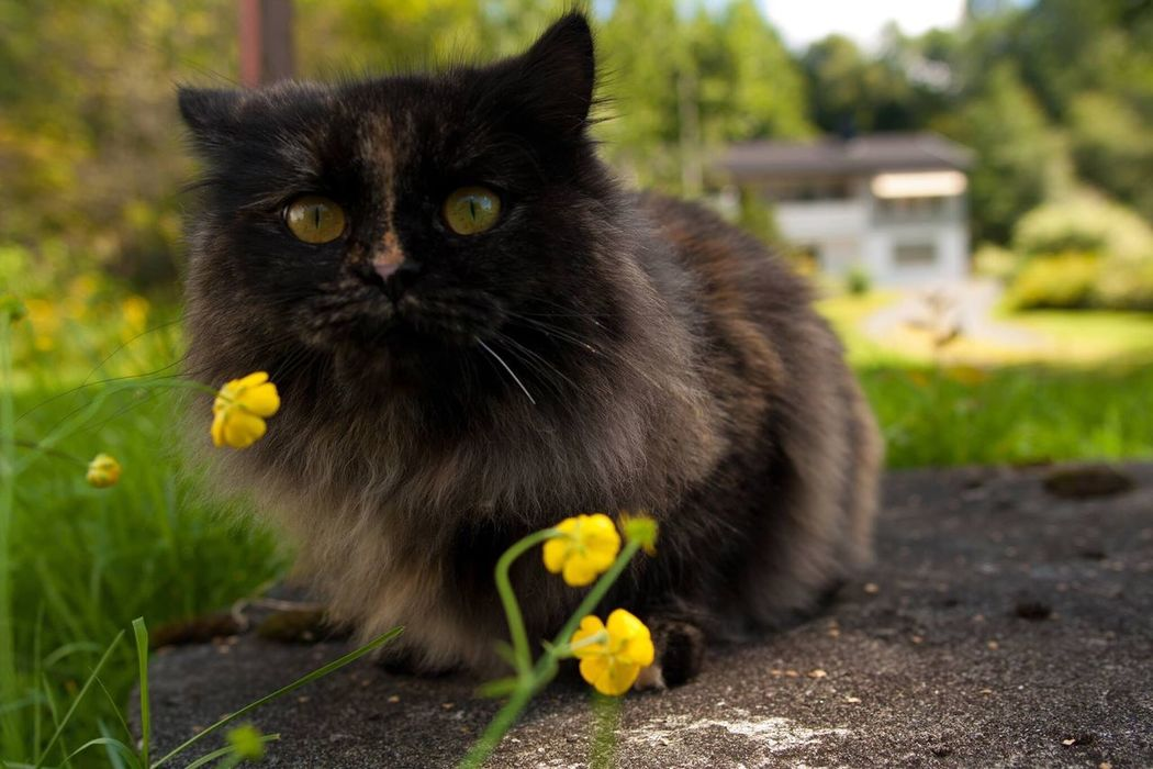 Wake Up Smell The Flowers Cat Hey Hey Hey Kitten