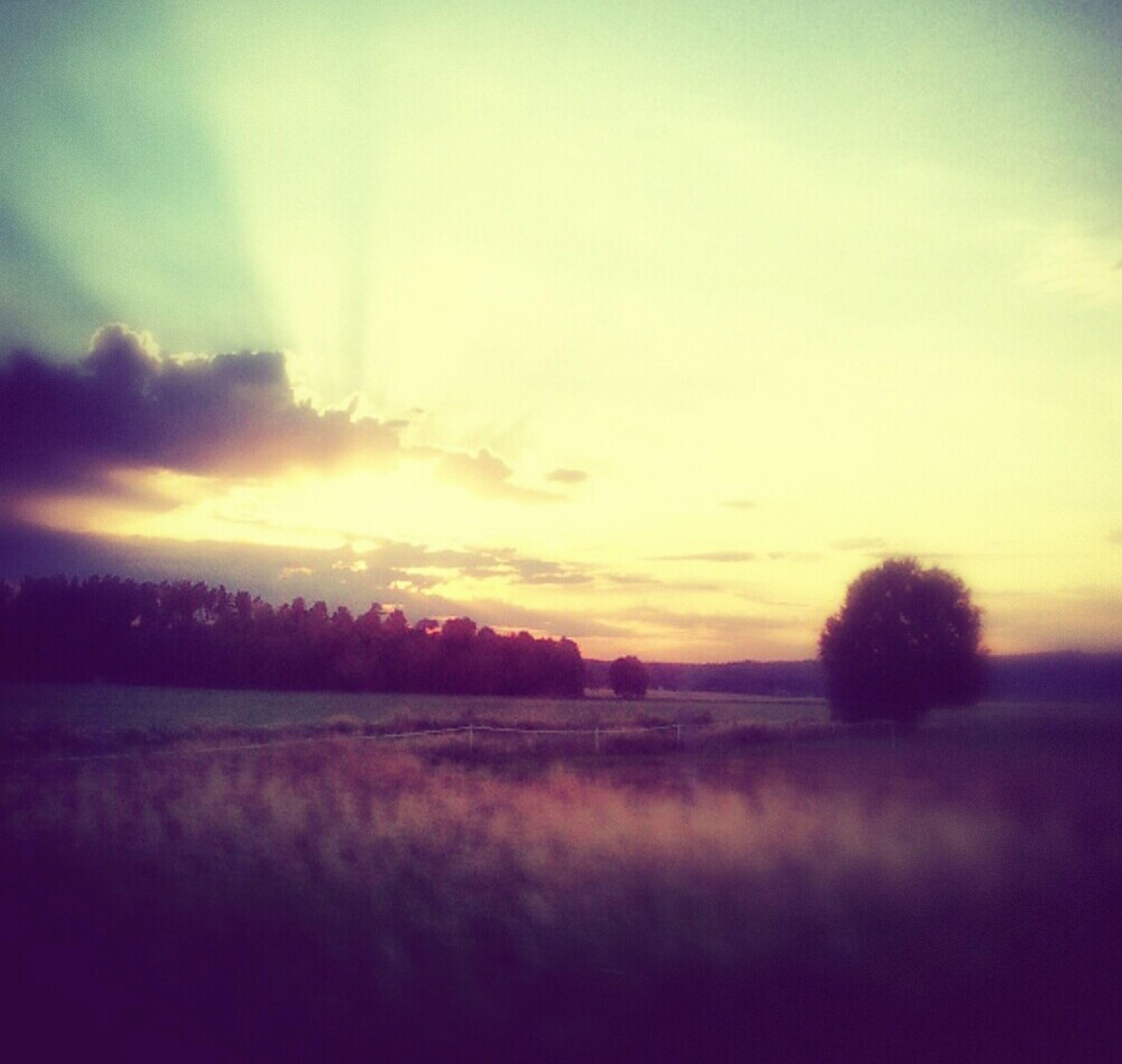 sunset, tranquil scene, tranquility, landscape, scenics, beauty in nature, field, sky, tree, nature, silhouette, idyllic, rural scene, orange color, non-urban scene, cloud - sky, outdoors, horizon over land, dusk, no people