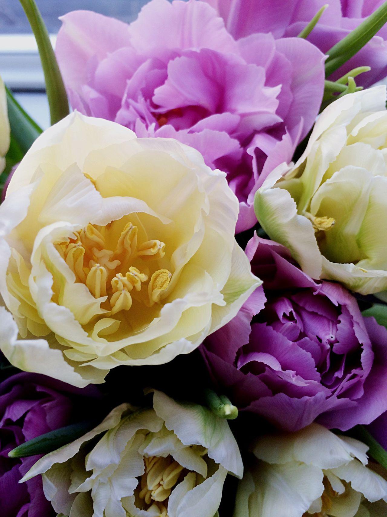 Tulips Flowerporn Flowerphoto Flowerstagram Flowerhead Flower Collection Flowers, Nature And Beauty Flowers_collection EyeEm Gallery EyeEm Flower Floweroftheday