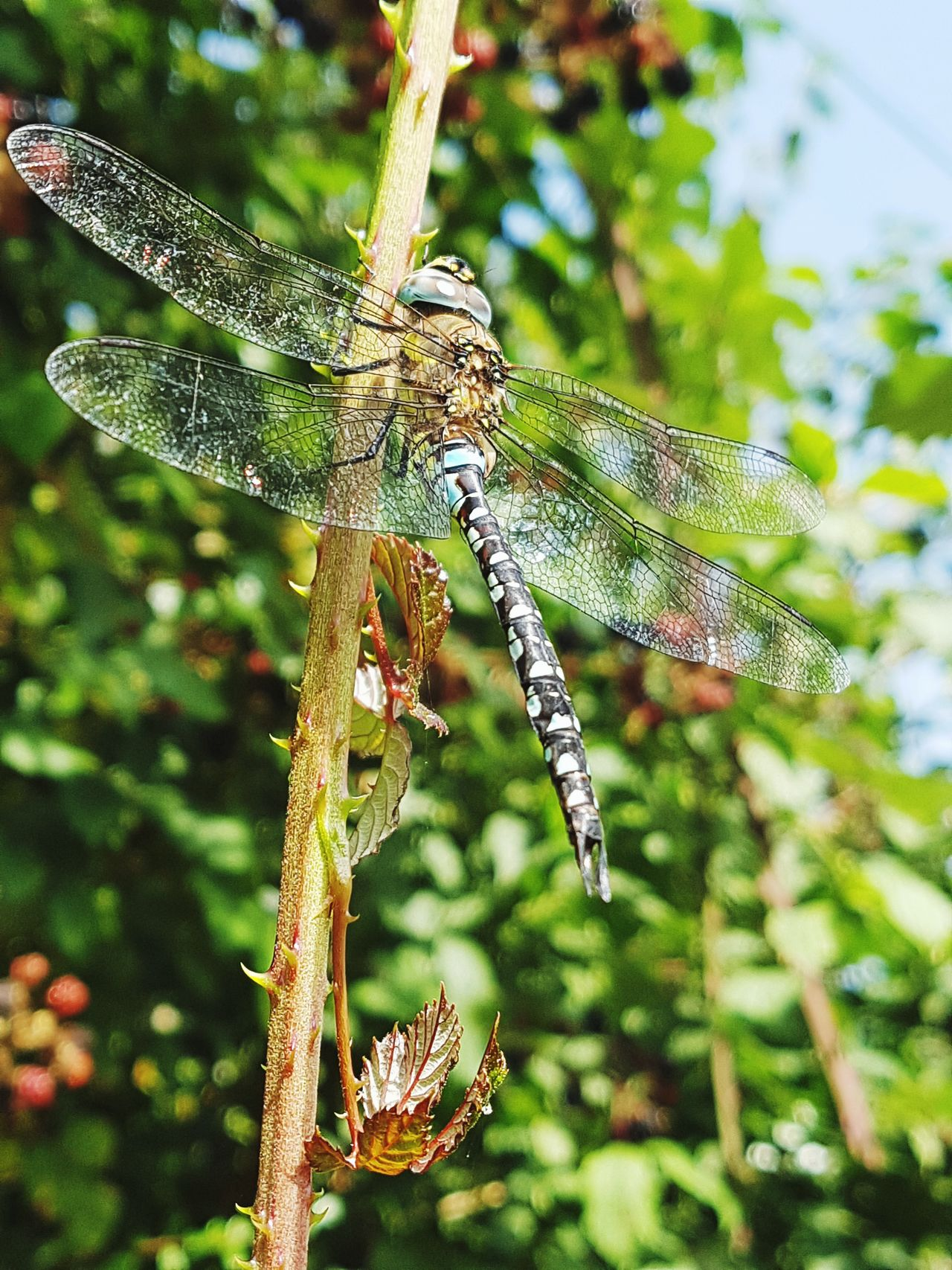 Fly away with me, to a place where we could be anything we want to be 💕🌿🌹🎶🎼🎵 Tom Walker Nature_collection Travel Photography C'mon Fly Away With Me Nature Animals In The Wild Dragonfly Nature_perfection English Countryside