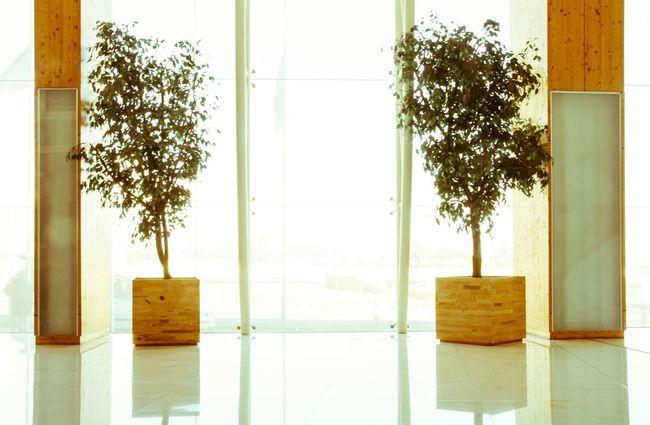 Hardlight Symmetry Entrance Hall Plants